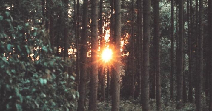 Sonnenuntergang im Wald Kopie